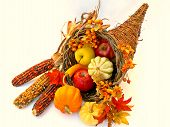 stock photo of bittersweet  - cornucopia - JPG