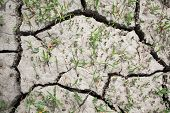 Cracked And Parched Dry Land In Drought