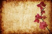 Purple Orchid Floral Background