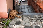 The Street Dog Is Sleeping. Next To The Concept Of Stray Animals Trash, Environmental Pollution Conc poster