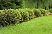 Picturesque Landscape With Beautiful Green Lawn On Sunny Day. Gardening Idea poster
