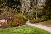 Garden Path Between Shrubbery Of Azaleas