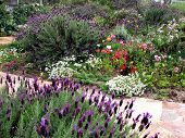stock photo of english cottage garden  - Cottage Garden 1 - JPG