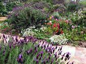 stock photo of english cottage garden  - Cottage Garden 1 - JPG