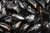 foto of mollusca  - Fresh Mussels ready to cook on the plate - JPG