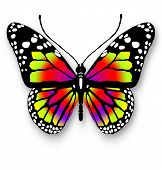 One Colorful Butterfly