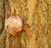Snail And Wooden Texture Tree Color Conspiration Concept