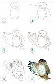 Educational Page For Kids. How To Draw Step By Step A Cute Owl. Back To School. Developing Children  poster