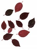 Red Plum Leaves