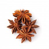 Anisetree stars on a white background