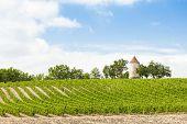 vineyard with windmill near Ribagnac, Dordogne Department, Aquitaine, France