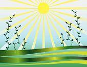 Vegetation Ornament From The Sun