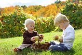 foto of orchard  - Two happy young children a little boy and his baby brother are sitting outside at an apple orchard on a sunny autumn day eating fruit and playing with a basket full of apples