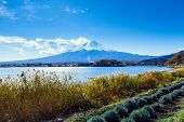 Mt. Fuji during autumn
