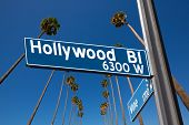 pic of washingtonia  - Hollywood Boulevard with  vine sign illustration on palm trees background - JPG