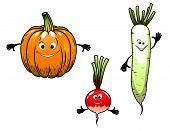 Radish, turnip and pumpkin vegetables