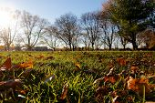Sunlit Fall Lawn