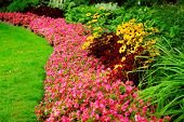 Blooming flowers in late summer garden flowerbeds