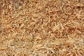 Stack Of Dry Corncobs And Corn Leaves