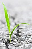 Green grass growing from crack in old asphalt pavement