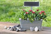 image of pot-bellied  - small daisies in metal pot with sign to leave a romantic message and stone heart - JPG