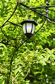 Wrought iron arbor with lantern in lush green garden