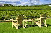 Muskoka chairs and table near vineyard at winery
