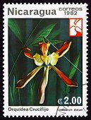 Postage Stamp Nicaragua 1982 Epidendrum Alatum, Orchid