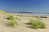 stock photo of pacific rim  - Sand dunes on Long Beach in Pacific Rim National park - JPG