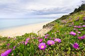 Coast of Aegean sea with blooming wildflowers in Chalkidiki, Greece