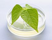 stock photo of genetic engineering  - Genetically modified plant tested in petri dish - JPG