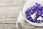 Foraged edible purple and white violet flowers in bowl on wood background with copy space