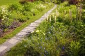 Summer garden with paved path and blooming wildflowers