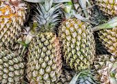 Bunch Of Fresh Pineapples At Farmers Market