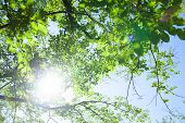 Fresh green leaves of cherry on blue sky background