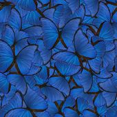 seamless background from blue morpho butterflies