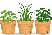 Illustration Featuring Potted Herbs