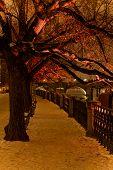 Night Prague, park