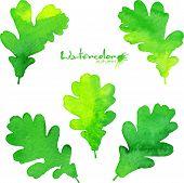 Summer green watercolor painted foliage set