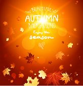 Enjoy the autumn with beautiful autumn leaves on bright background