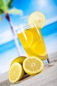 Lemon cocktail drink