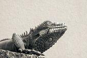 Metal Lizard Of Beige Color