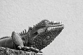 Metal Lizard Of Gray Color