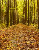 autumn forest trees. nature green wood sunlight backgrounds