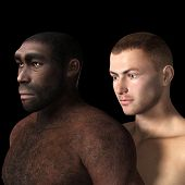 picture of homo  - Digital 3D Illustration of a Homo Erectus - JPG