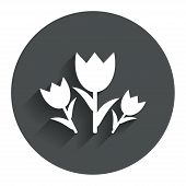 Flowers sign icon. Roses symbol.