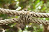 Close Up Of Frayed Old Ropes