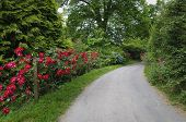 Country Lane In Devon