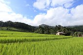Agriculture Of Asia, Terrace Green Rice Fields Of Farming Season