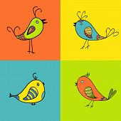 set of color birds for design